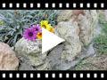 Video from Alpargatas Menina Croché com Tiras