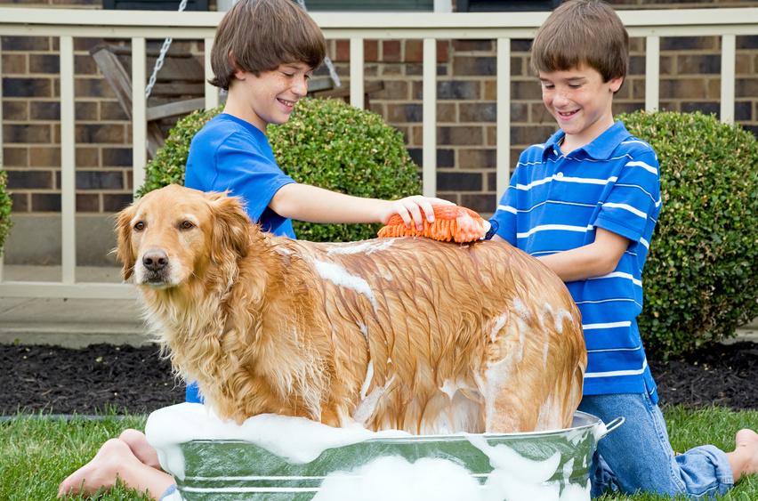 O cão, uma boa higiene